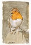Robin 2 by Charles Dawson